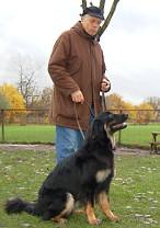 sitzender, schwarzmarkener Hovawart mit Hundeführer