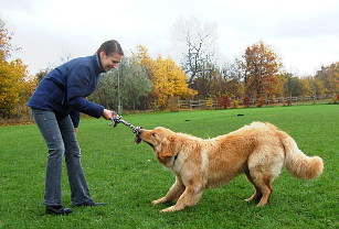 Hovawart spielt mit Hundeführerin